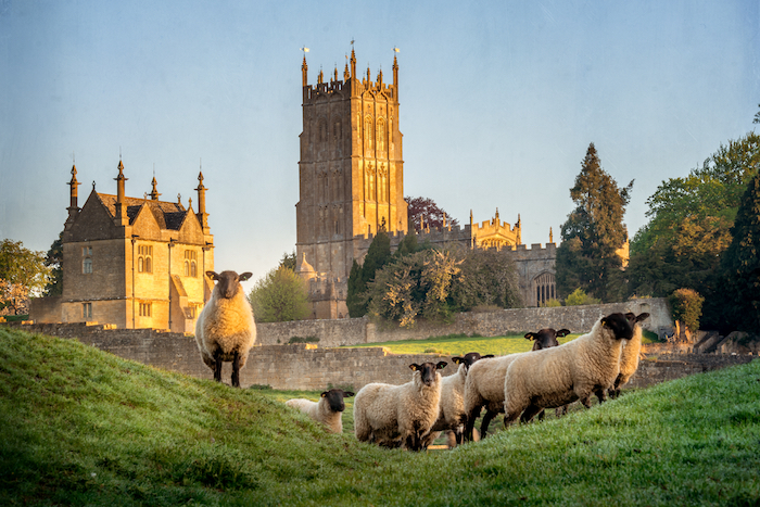 Chipping Campden landscape, featuring sheep and a church in the background.